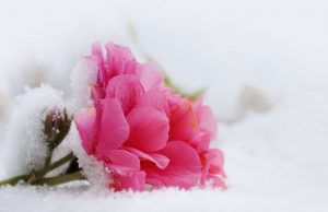 Saiba como cuidar do seu jardim no inverno