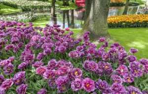 Importância do sistema de irrigação para jardins residenciais